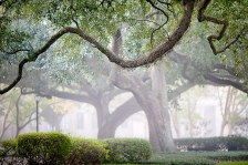 The Oaks at LSU