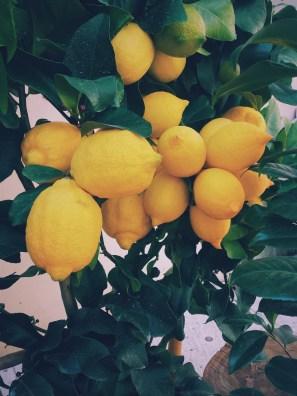 Sitronoljen presses ut av skallet på frukten.