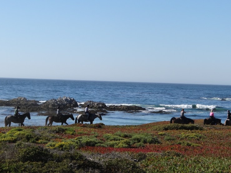 California Road Trip Itinerary - 17-mile drive horse riding