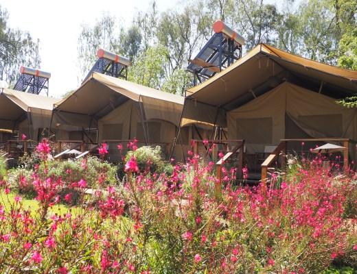 Wildebeest Eco Camp Nairobi