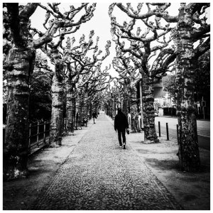 Corridor of Trees, Frankfurt © Helen Jones-Florio