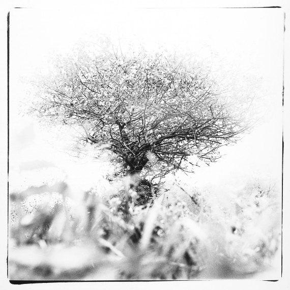 1- L'Origine du Monde © Michel Delsol. Nature Series. BW close up of tree - polaroid