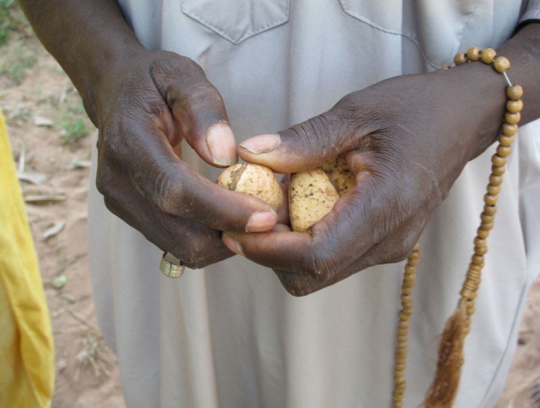 Kola nuts-traditional-silafando, The-Gambia © Jason Florio