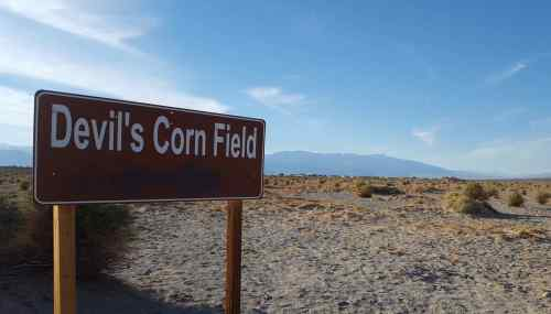 devil-cornfield