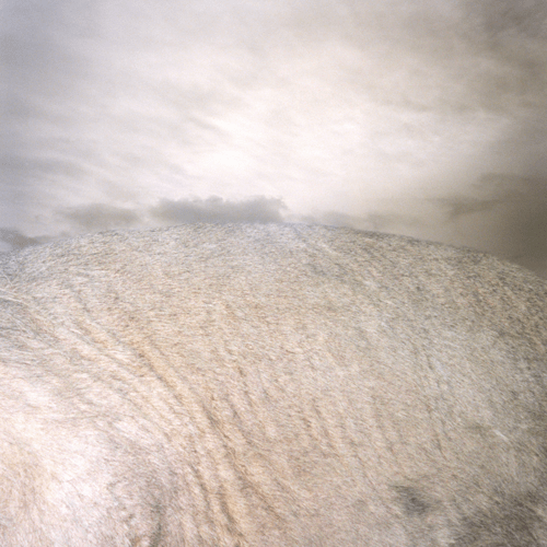 Grounded No. 4 - Pigment Print, Variable sizes