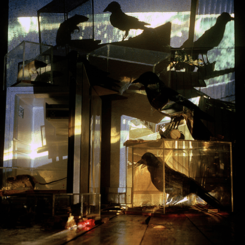 Natural Habitat : Installation 1990