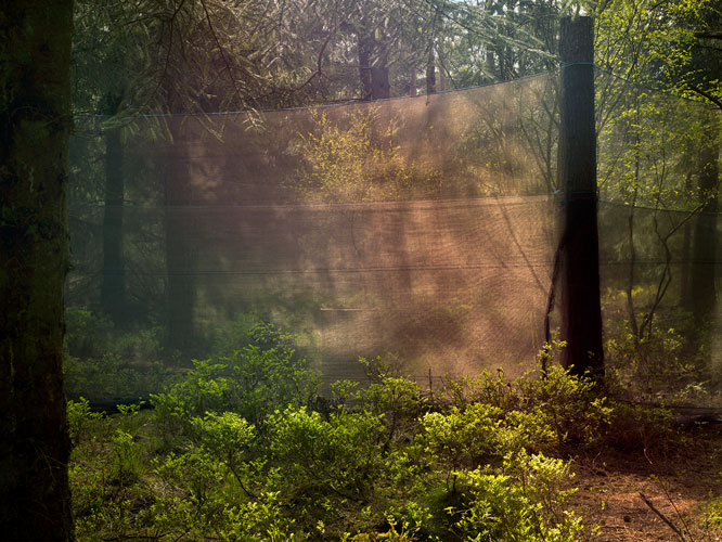 Forest Operations 18 - Archival Pigment Print