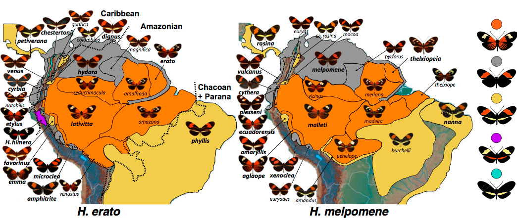 The Resemblance of Heliconius erato and Heliconius melpomene