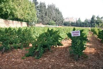 vinranker