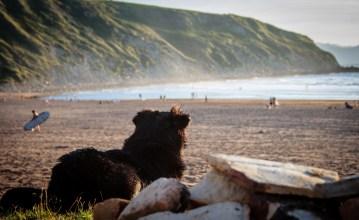 Hund mit Surfer an einem Strand in Nordspanien