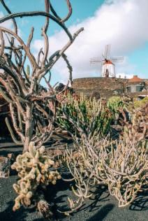 Mühle im Jardin de Cactus