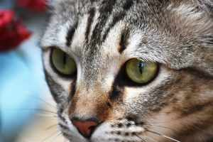 Fotosession mit Tabby