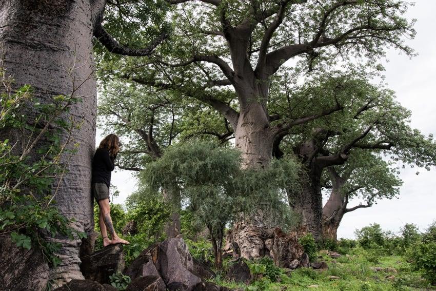 Kaffeepause bei den Baobabs