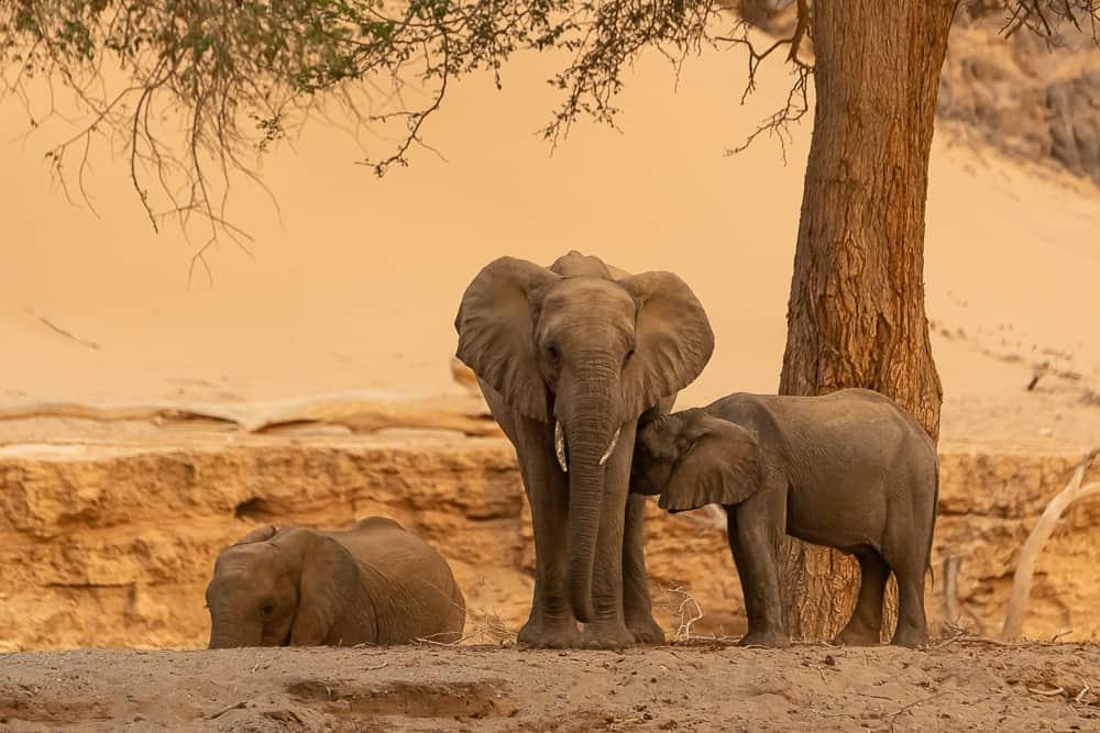 Hoanib-Elefanten