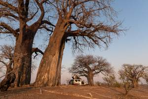 Camplife in Mana Pools und Chitake