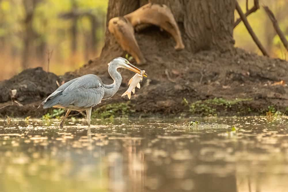 Birdlife at the waterhole