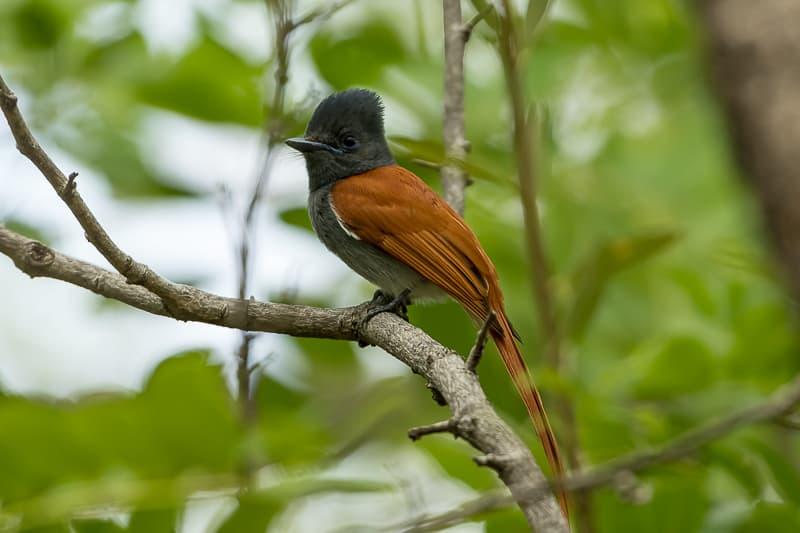 Birdlife in Siavonga