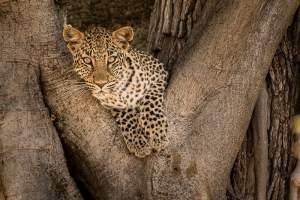 Reto, der Leoparden-Flüsterer ☺️