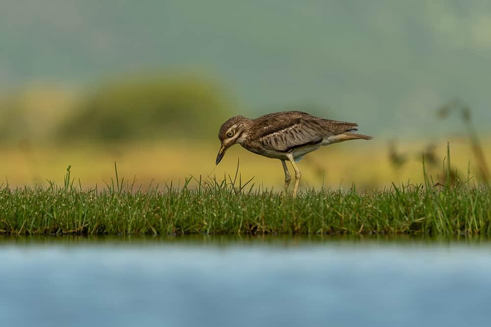 Bird at Lagoon Hide in Zimanga
