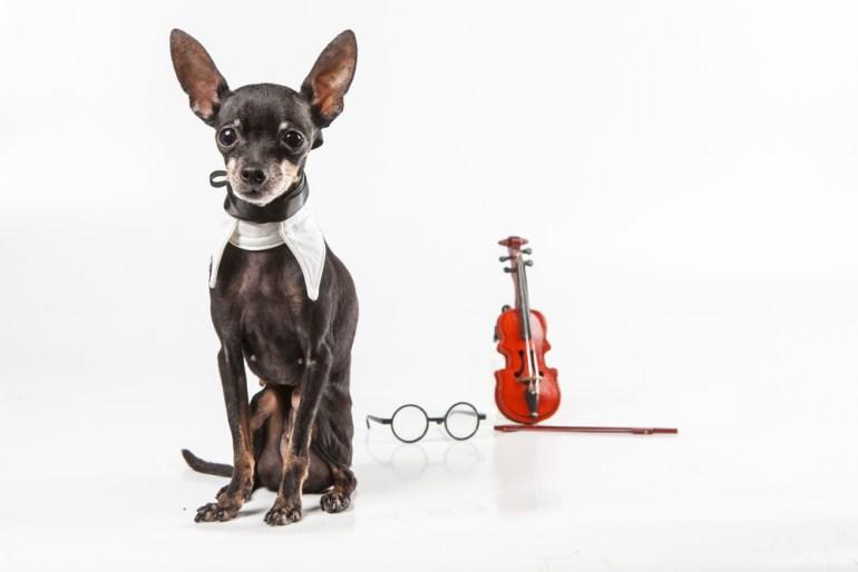 Dog and violin medium