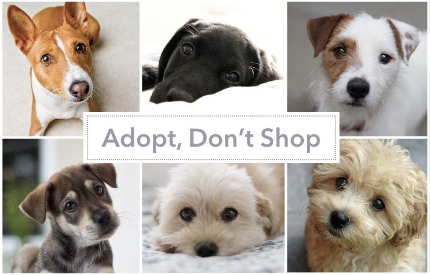 Where can I adopt a dog in Hong Kong? - hellodog