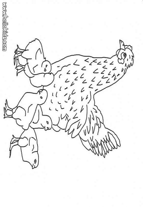 Hen colouring pages