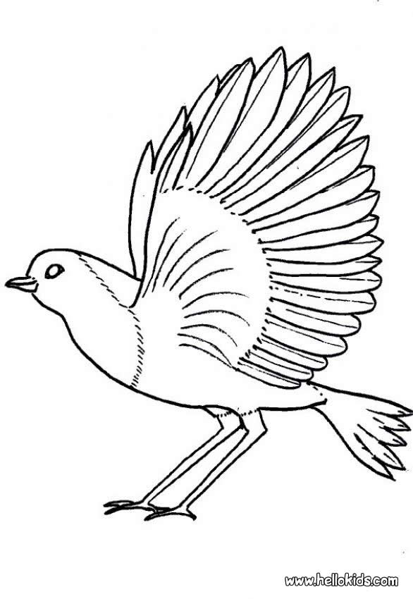 Printable bird south african colouring 9jasports