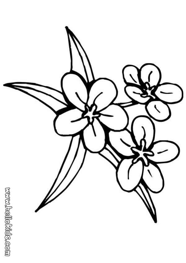 FLOWER COLORING PAGES FOR KIDS « Free Coloring Pages