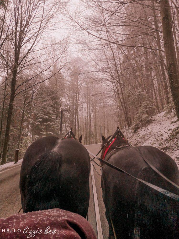 Carriage ride to Neuschwanstein Castle in winter