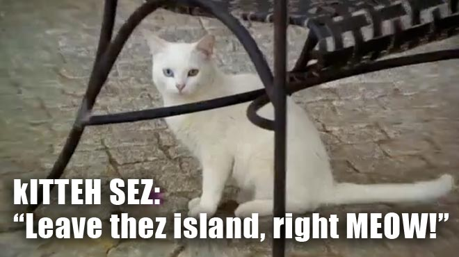 The freaky white cat on Madeira Island on the Bachelorette.
