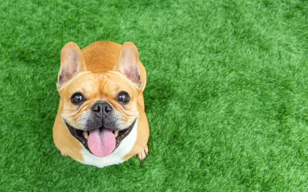 Pets and Prenups: What about Fido?