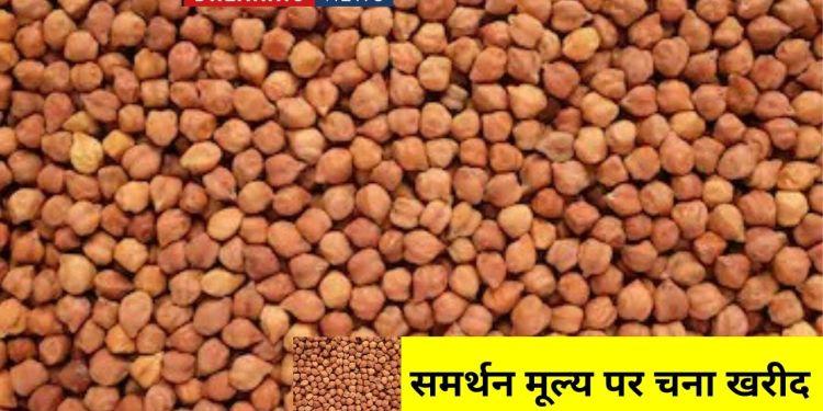 MSP support price , Gram MSP registration, MSP, MSP price in Rajasthan, Rajasthan Governemnt, Gram rate, chana rate,