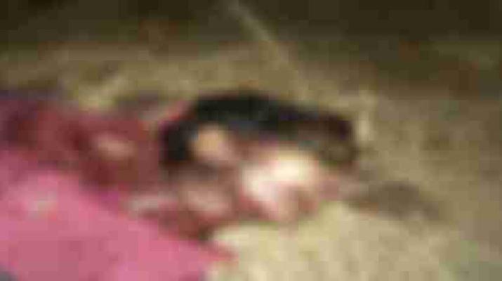 घर से महज 50 मीटर की दूरी पर महिला पर किया बाघ ने अचानक हमला, महिला की मौके पर ही मौत 1