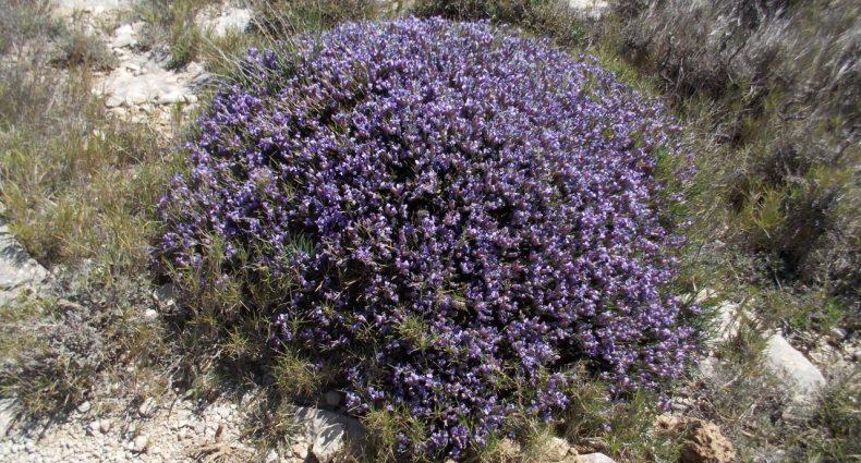 botánica a la valenciana