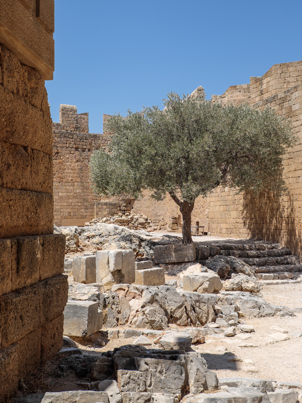 Olive tree growing in the acropolis of Lindos | Hello Victoria