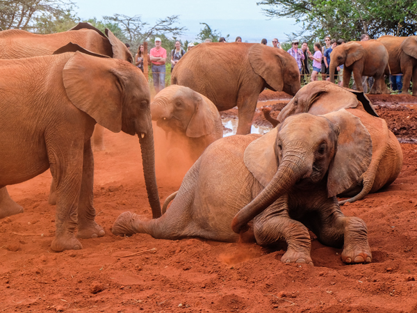 Elephant orphans at the David Sheldrick Wildlife Trust, Nairobi | Hello Victoria