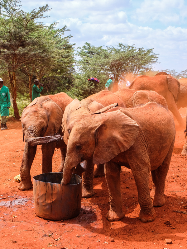 Visiting the David Sheldrick Wildlife Trust, Nairobi | Hello Victoria