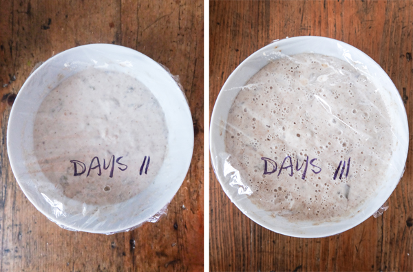 Sourdough starter recipe | Hello Victoria