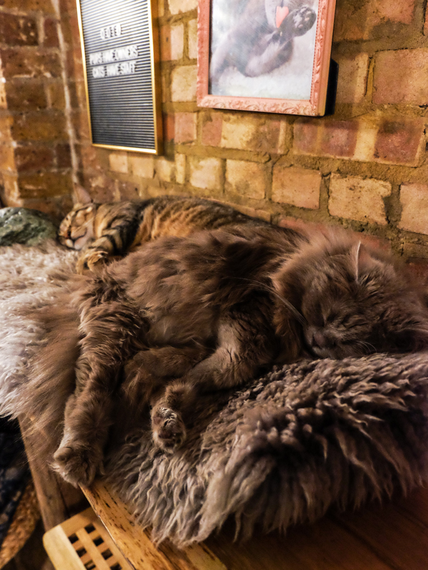 Cat cafe near Old Street, London | Hello Victoria