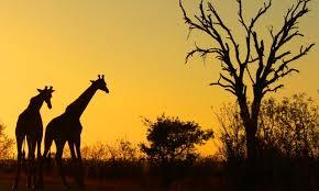 africa mooi