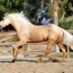 11 Popular Horse Breeds With Pictures Helpful Horse Hints