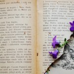 How to Decide Between Plain Prose and Beautiful Prose