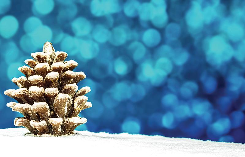 Snowy pinecone