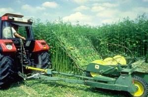Hemp farming would create jobs for California