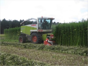Hemp farming would give farmers new growth markets