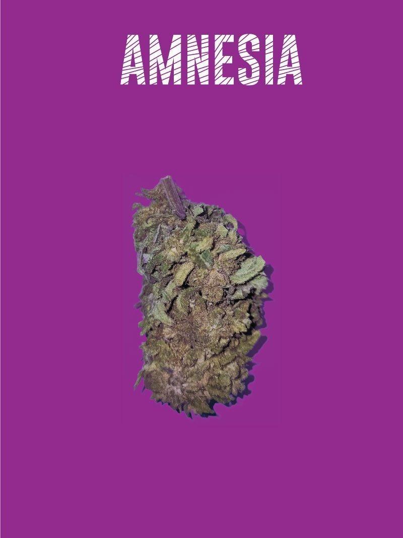 Amnesia CBD flowers