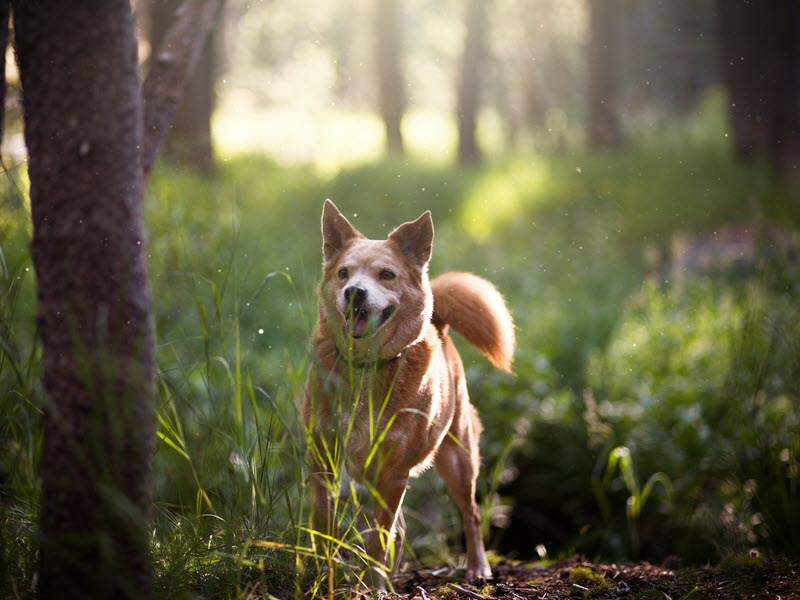 Happy Healthy Dog in Forest
