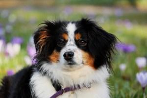 Medium Dogs thrive on CBD and Hemp Oil Extract from Hemp Oil Rockstar