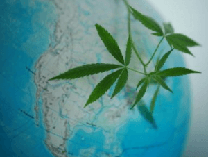 cbd around the world