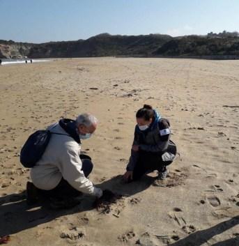 nettoyage des plages 2021 - Deux jumeaux laisse de mer ganix